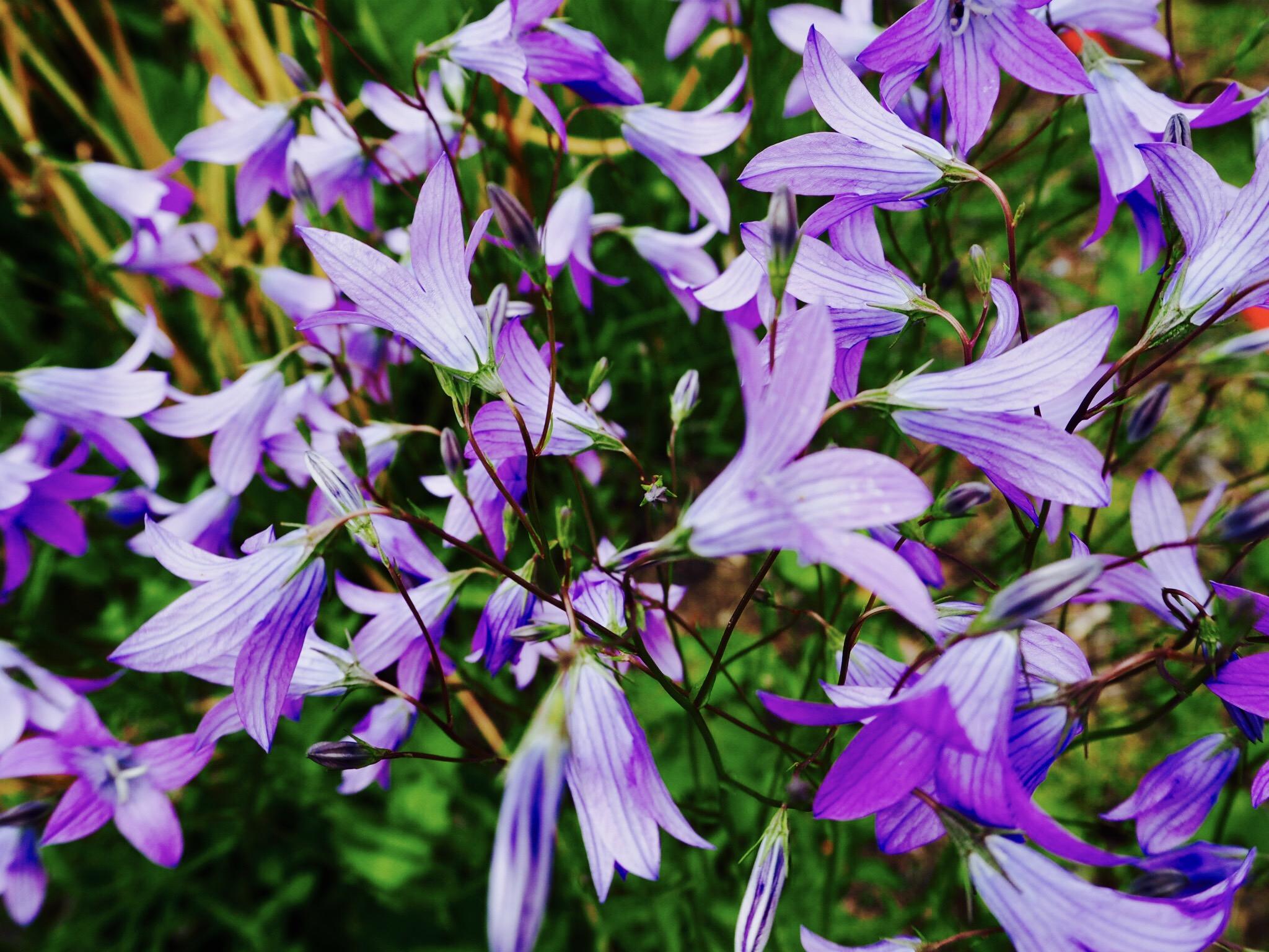 Midsummer Flowers Anna S Diary